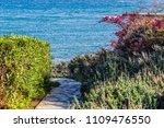 Path To Sea Coast Among Flower...