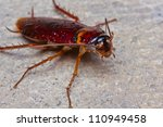 close up of cockroach on floor | Shutterstock . vector #110949458