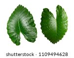 isolated tropical green leaves... | Shutterstock . vector #1109494628