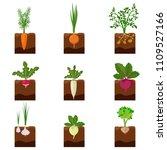 set of different vegetables... | Shutterstock .eps vector #1109527166