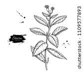 stevia flower vector drawing.... | Shutterstock .eps vector #1109577893