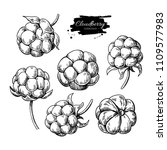 cloudberry vector drawing.... | Shutterstock .eps vector #1109577983