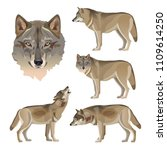 Set Of Vector Gray Wolves....