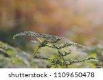 fern leaf close up  | Shutterstock . vector #1109650478