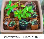a collection of small plants... | Shutterstock . vector #1109752820