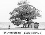 st. ann  jamaica   march 25... | Shutterstock . vector #1109785478