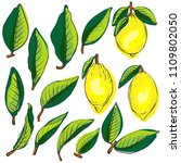 set of lemons and leafs bright... | Shutterstock . vector #1109802050