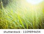 image grass flower field with...   Shutterstock . vector #1109894654