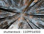 trees in a garden outdoors... | Shutterstock . vector #1109916503