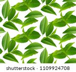 green tea leaves seamless and... | Shutterstock .eps vector #1109924708