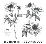 sketch floral botany collection.... | Shutterstock .eps vector #1109933003