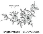 sketch floral botany collection.... | Shutterstock .eps vector #1109933006