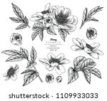 sketch floral botany collection.... | Shutterstock .eps vector #1109933033
