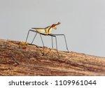 colourful eye tiny long legs... | Shutterstock . vector #1109961044