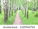 beautiful birch trees with... | Shutterstock . vector #1109964704