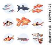 popular aquarium fishes. set of ... | Shutterstock .eps vector #1109966426
