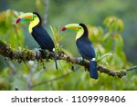 two tropical birds with... | Shutterstock . vector #1109998406