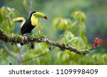 two tropical birds with...   Shutterstock . vector #1109998409