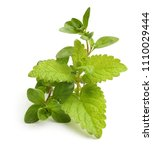 thyme fresh herb and mint... | Shutterstock . vector #1110029444