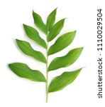 twig with green leaves isolated ... | Shutterstock . vector #1110029504