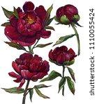 maroon peonies illustration  a...   Shutterstock . vector #1110055424