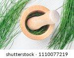equisetum  horsetail  herb in... | Shutterstock . vector #1110077219