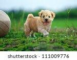 Stock photo cute dog 111009776