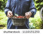 organic fruit. farmers hands... | Shutterstock . vector #1110151253