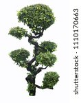 bonsai ebony element garden... | Shutterstock . vector #1110170663
