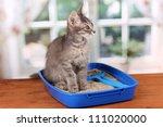 Small Gray Kitten In Blue...