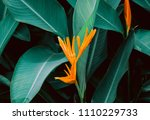 flower with dark green leaf in... | Shutterstock . vector #1110229733