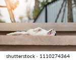 a cat is yawning on cement... | Shutterstock . vector #1110274364