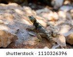 hardun on rhodes island ... | Shutterstock . vector #1110326396