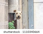 cute dog staring at the camera... | Shutterstock . vector #1110340664