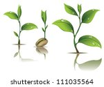 young plant life process on... | Shutterstock .eps vector #111035564