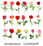 a set of assorted roses | Shutterstock . vector #111042659