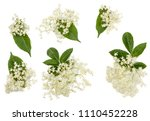 Stock photo elder flowers isolated on white 1110452228