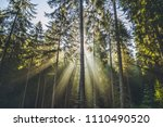 trees illuminated by sunbeams... | Shutterstock . vector #1110490520