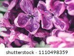 the petals of the flower are... | Shutterstock . vector #1110498359