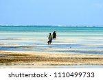 Pongwe Beach  Zanzibar   Augus...