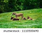 horizontal shot of a beautiful...   Shutterstock . vector #1110500690