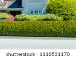 nicely trimmed bushes  green... | Shutterstock . vector #1110531170