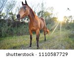Animal Horse Brown - Fine Art prints
