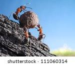 Team Of Ants Rolls Stone Uphil...