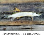 pike on a old wooden board | Shutterstock . vector #1110629933
