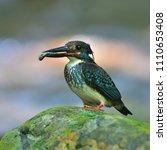 beautiful bird  male of blue...   Shutterstock . vector #1110653408