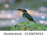 beautiful bird  male of blue...   Shutterstock . vector #1110653414