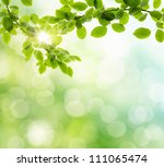 natural green background with... | Shutterstock . vector #111065474