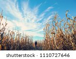person walking among the dried... | Shutterstock . vector #1110727646