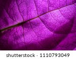 isolated close up of a purple... | Shutterstock . vector #1110793049